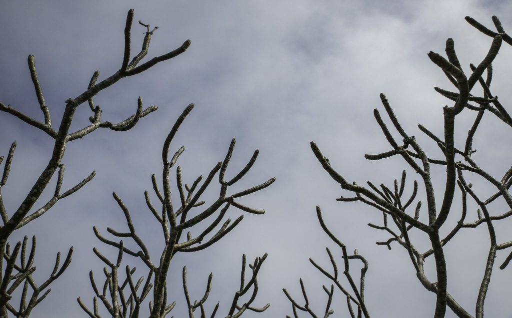 view of a cloudy sky through bare tree branches